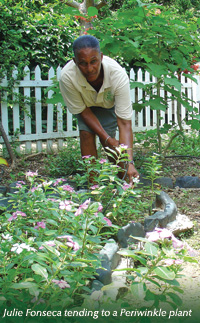 Julie-Fonseca tending to periwinkle plants