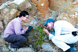 Colin Clubbe and Sara Barrios inspect a Croton fishlockii.