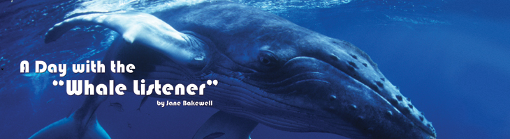 Whale Banner