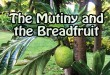 the-mutiny-and-the-breadfruit