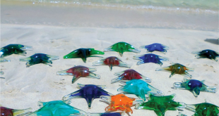Glass Starfish from Green VI are displayed on the beach