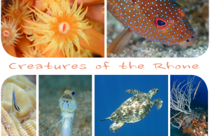 Creatures of the Rhone